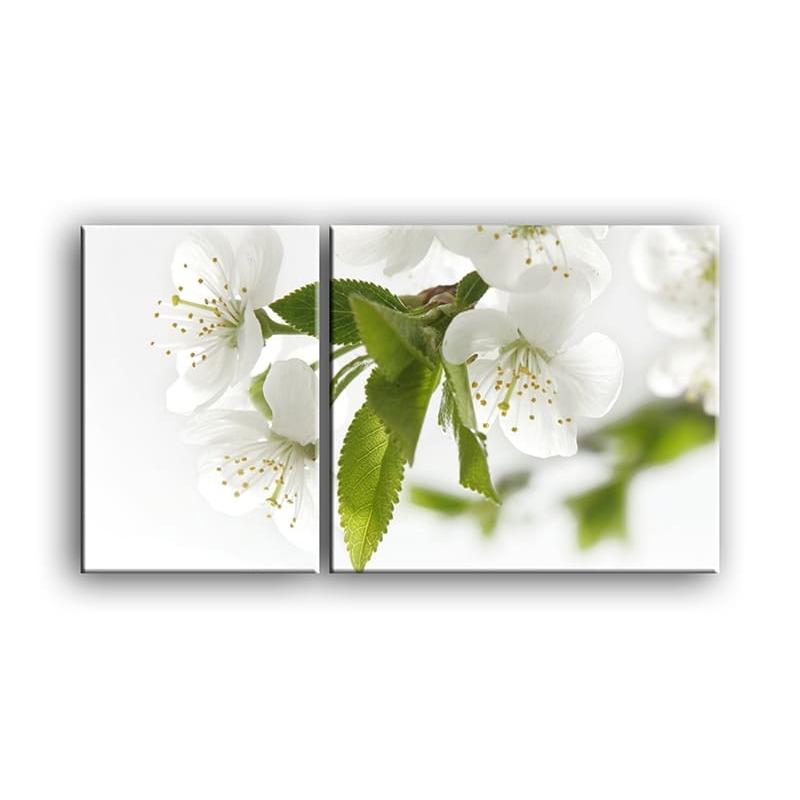 цветы вишни C7-002