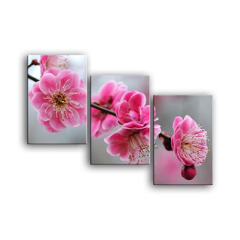 цветы вишни C7-005