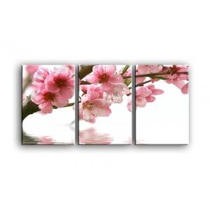 цветы вишни C7-006