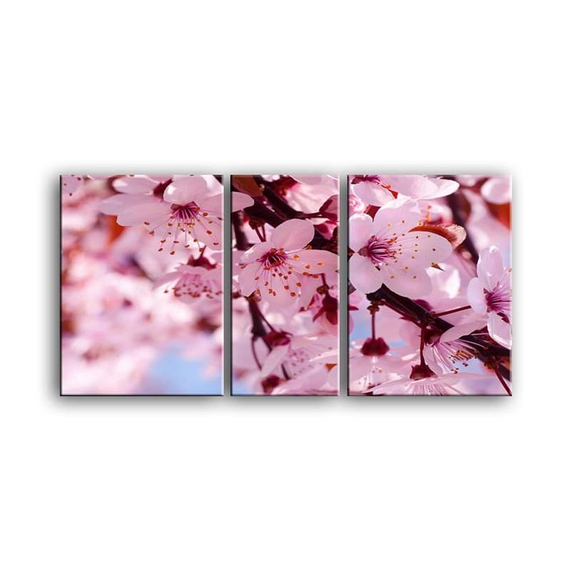 цветы вишни C7-007