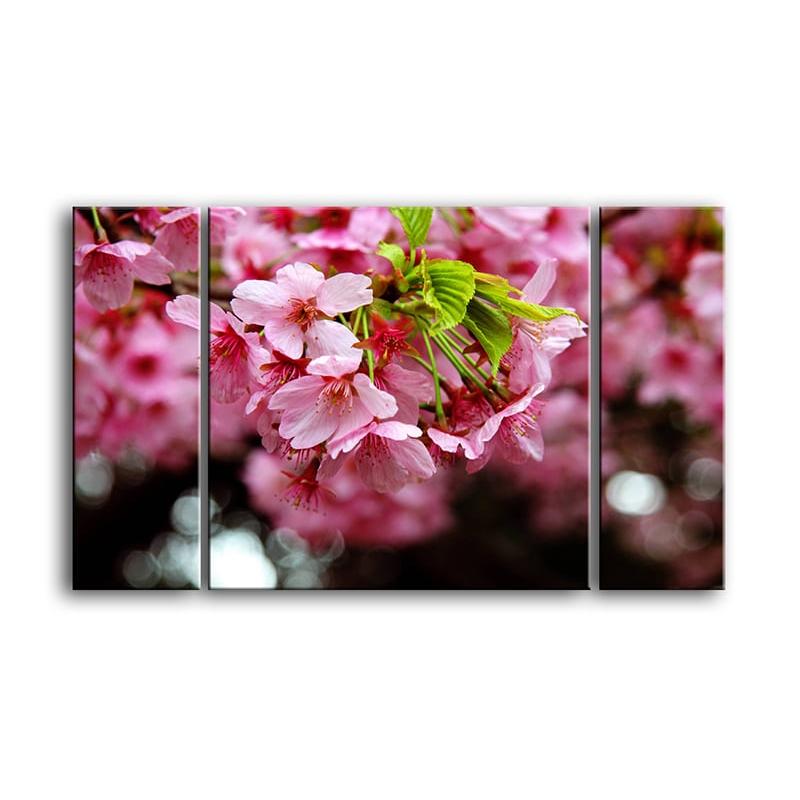 цветы вишни C7-008