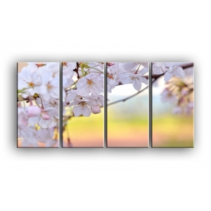 цветы вишни C7-009