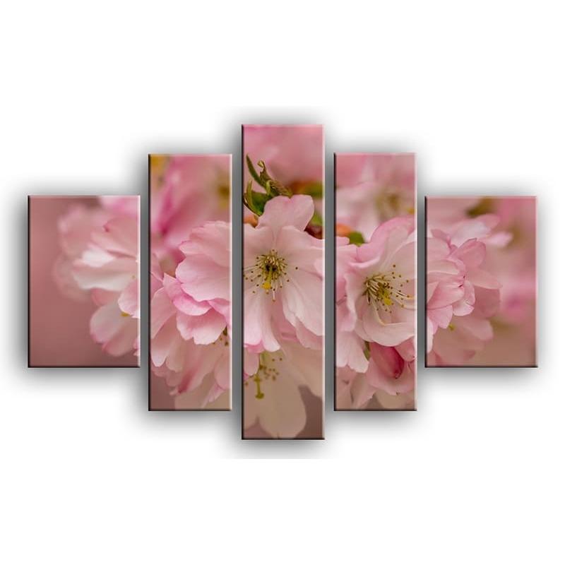 цветы вишни C7-013