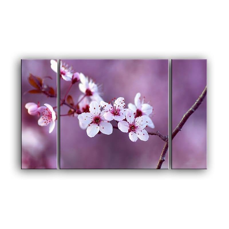 цветы вишни C7-018