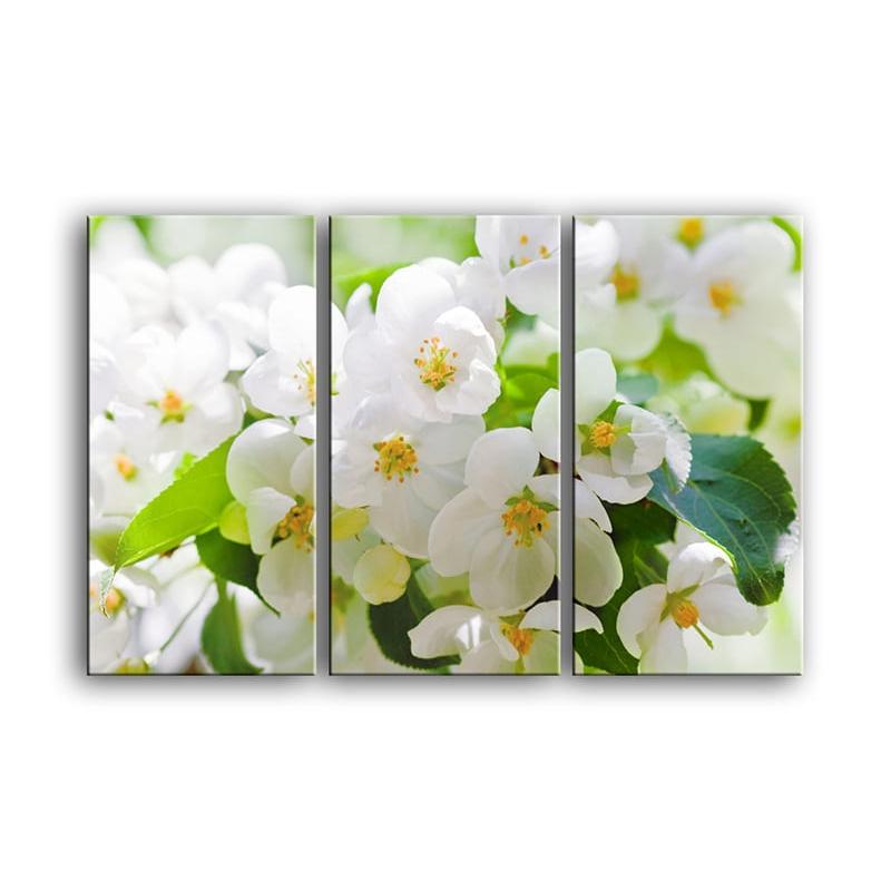 цветы вишни C7-019