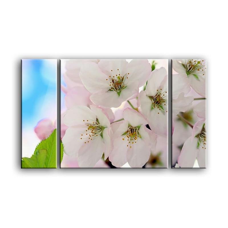 цветы вишни C7-020