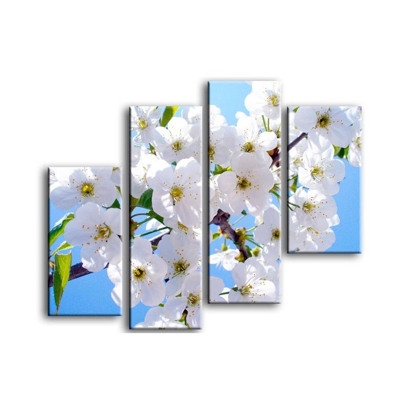 цветы вишни C7-023