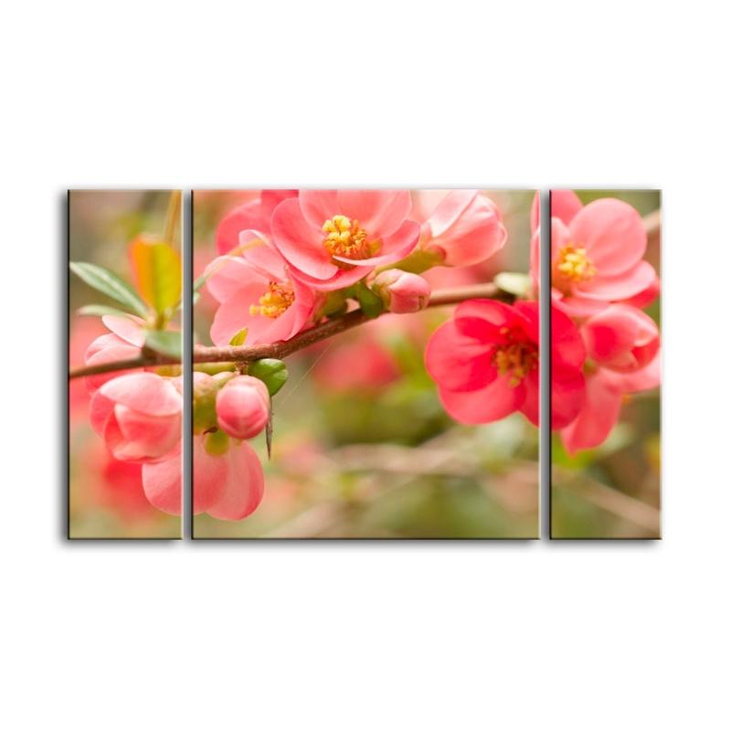 цветы вишни C7-024