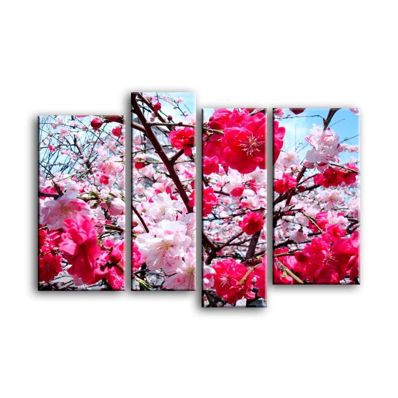 цветы вишни C7-025