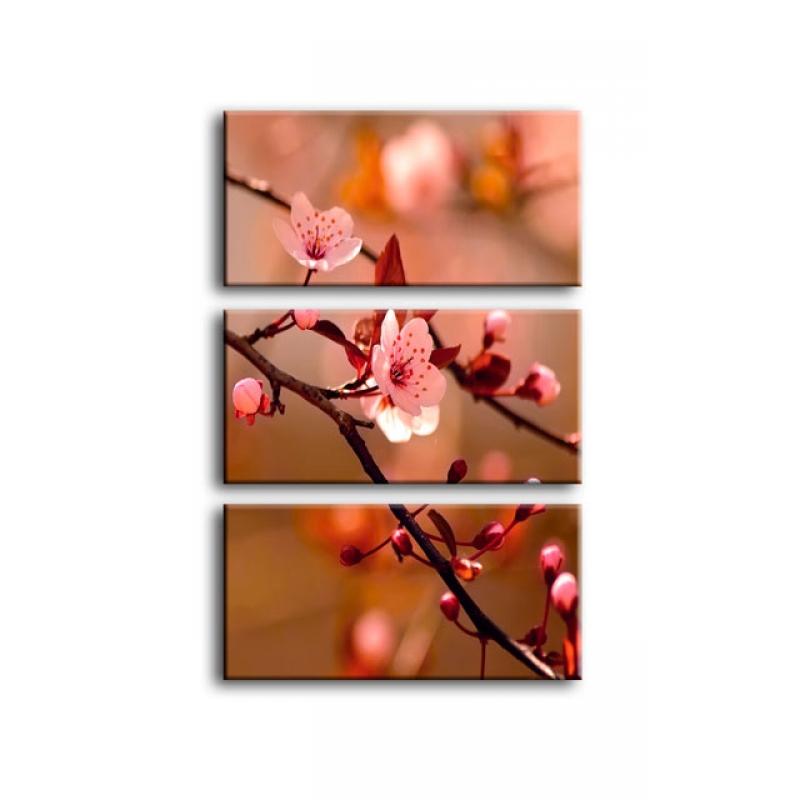 цветы вишни C7-029