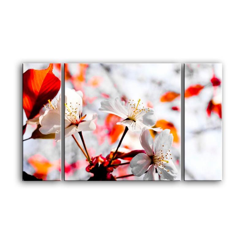 цветы вишни C7-032