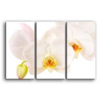 орхидеи C4-001