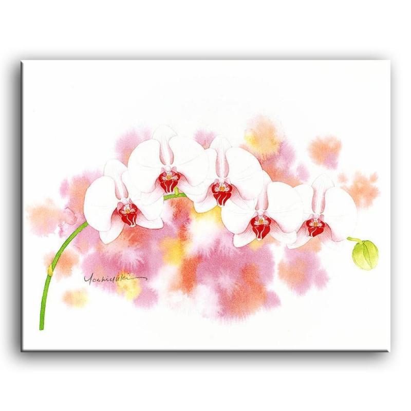 орхидеи C4-002