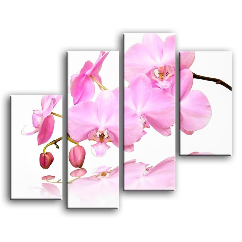 орхидеи C4-003