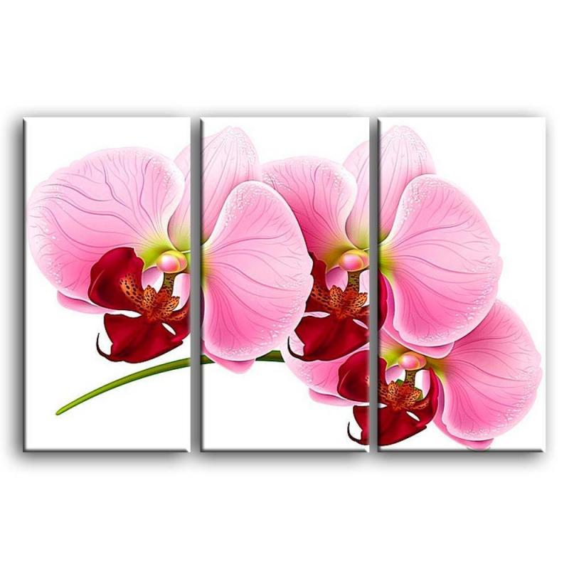орхидеи C4-005