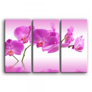 орхидеи C4-006