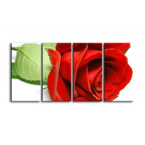 розы C1-001