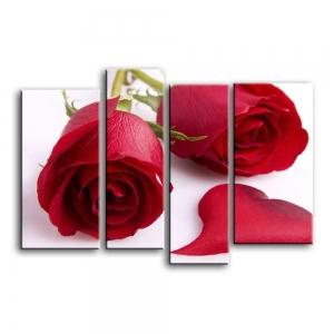 розы C1-003
