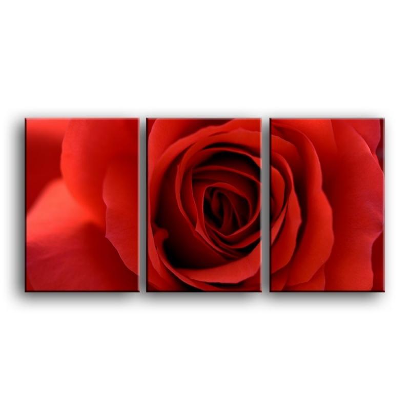 розы C1-004