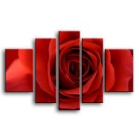розы C1-005