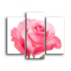 розы C1-007