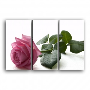 розы C1-008