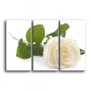розы C1-009