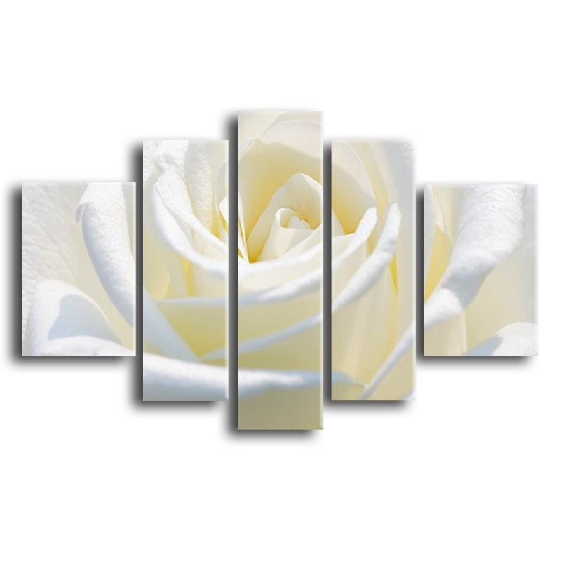 розы S1-004