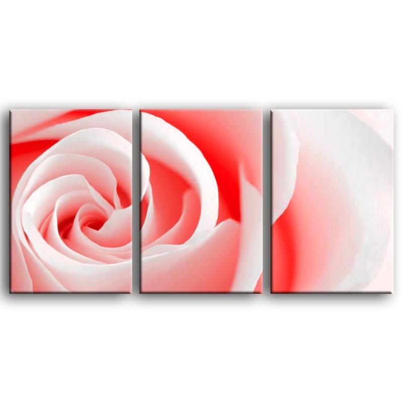 розы S1-005