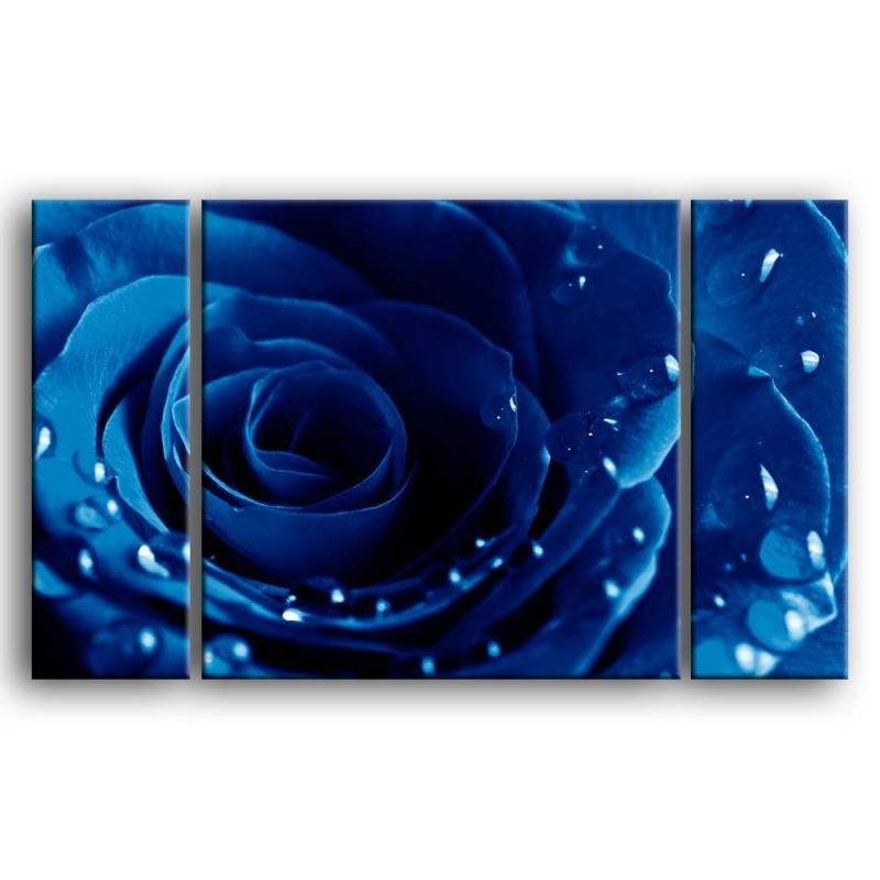 розы G1-004