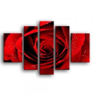 розы G1-005