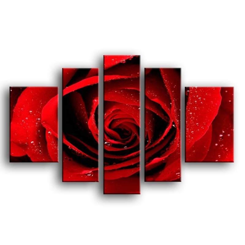 розы K1-004