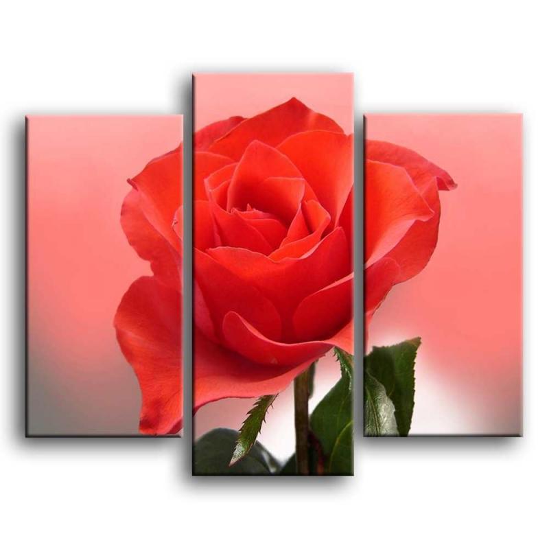 розы S1-006